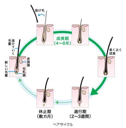 ヘアサイクル-花王