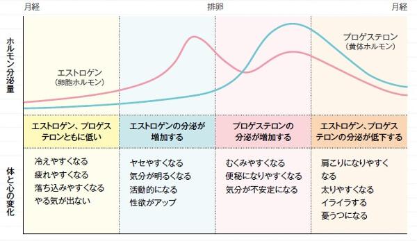生理周期とホルモン分泌