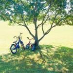 兄弟の自転車