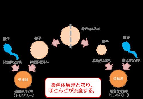 卵子の老化
