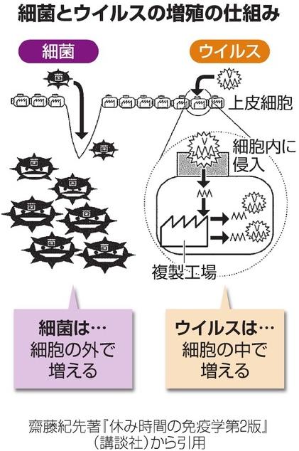 細菌とウイルスの増殖の仕組み