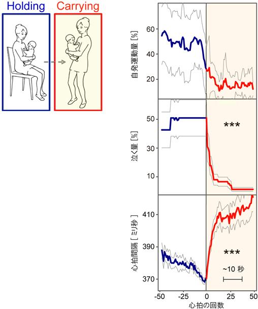 母親が「座って抱っこ(Holding)」から「抱っこして歩く(Carrying)」の前後における、赤ちゃんの行動と心拍の変化